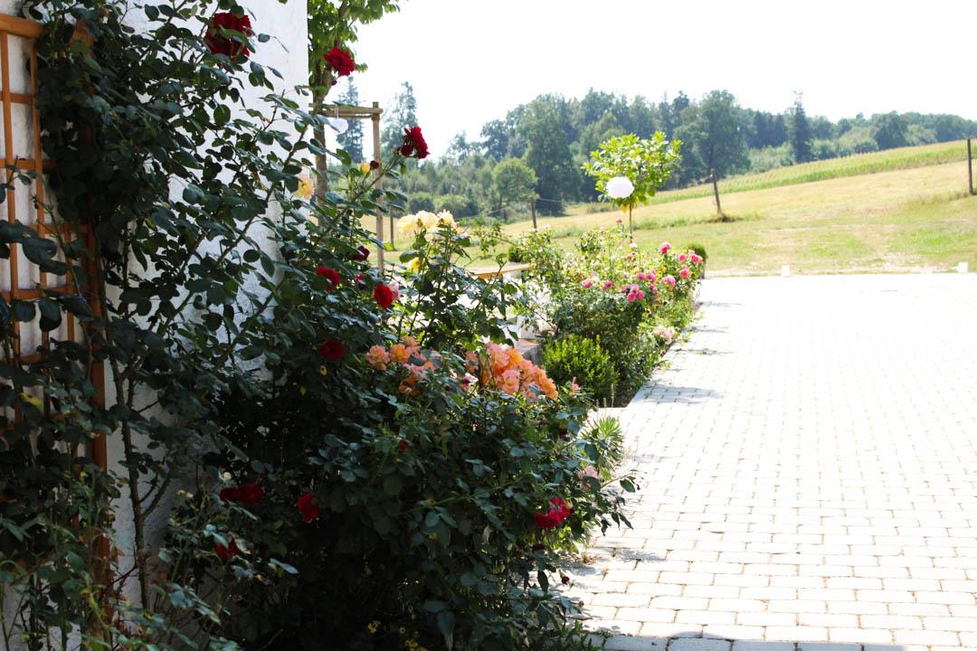 Der Weg von Gut Thurnsberg zur freien Trauung